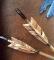 Arrow fletch detail